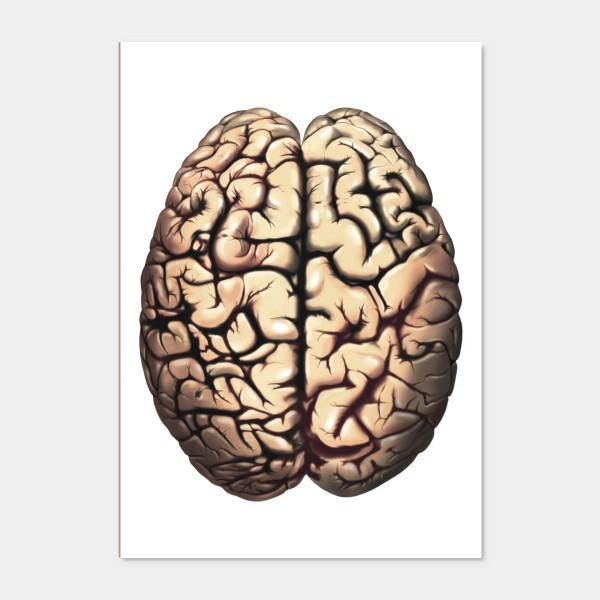Quadro Brain