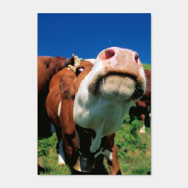 Quadro Dary Cow